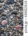 【貝殻】 48882816