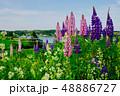 ルピナス(プリンスエドワード島(カナダ)) 48886727