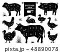 動物 肉 ベクトルのイラスト 48890078