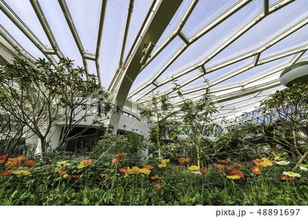 花 室内 植物園 48891697
