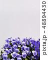 ビオラ 花 植物の写真 48894430