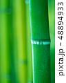 竹林 竹 竹藪の写真 48894933