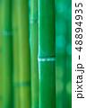 竹林 竹 竹藪の写真 48894935