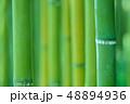 竹林 竹 竹藪の写真 48894936