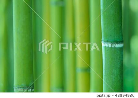 緑の竹林 48894936