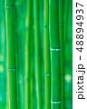 竹林 竹 竹藪の写真 48894937
