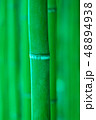 竹林 竹 竹藪の写真 48894938