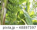バナナ 48897397