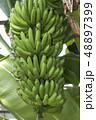 バナナ 48897399
