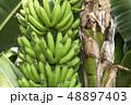 バナナ 48897403