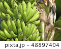 バナナ 48897404