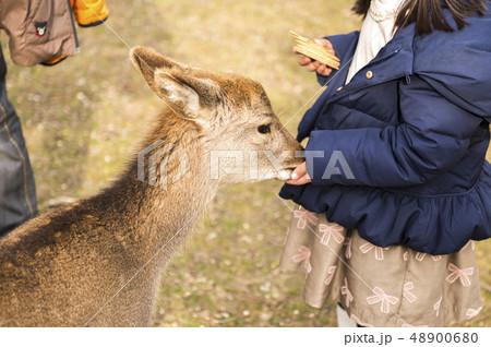 【日本・奈良県】奈良公園のシカ エサやり 48900680