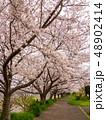 相模川ほとりの桜(神奈川県) 48902414