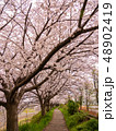 相模川ほとりの桜(神奈川県) 48902419