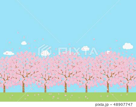 桜並木 48907747
