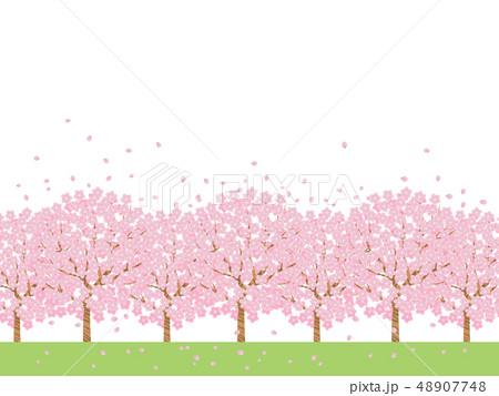 桜並木 48907748