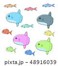 海水魚 カラフル 魚のイラスト 48916039