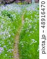 春の小道のイメージ 48916470
