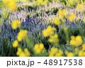 ラベンダー 花 植物の写真 48917538