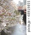 風景 花 植物の写真 48919855