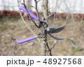 剪定 枝切り 枝打ちの写真 48927568