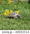 動物 かめ カメの写真 48932314