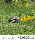 動物 かめ カメの写真 48932318
