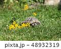 動物 かめ カメの写真 48932319