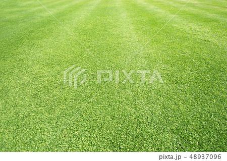Green grass background 48937096