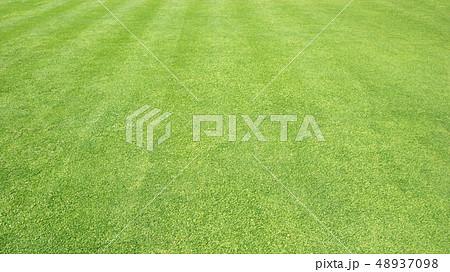 Green grass background 48937098