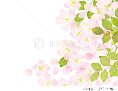 桜 水彩風 テクスチャー 48944981