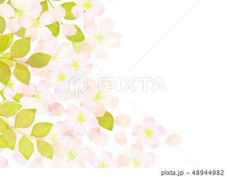 桜 水彩風 テクスチャー 48944982