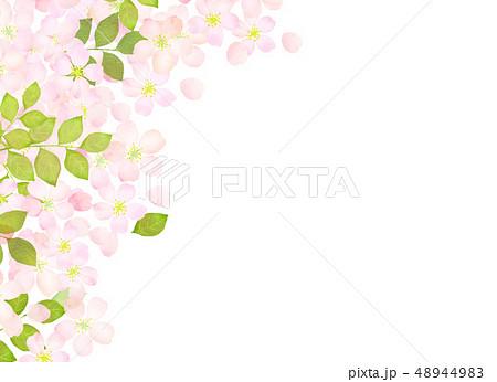 桜 水彩風 テクスチャー 48944983