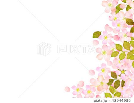 桜 水彩風 テクスチャー 48944986