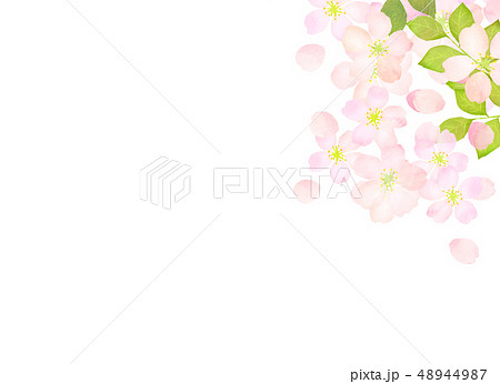 桜 水彩風 テクスチャー 48944987