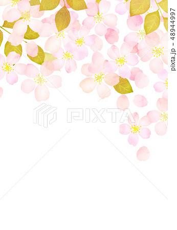 桜 水彩風 テクスチャー 48944997