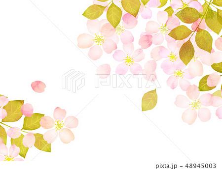 桜 水彩風 テクスチャー 48945003