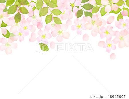 桜 水彩風 テクスチャー 48945005