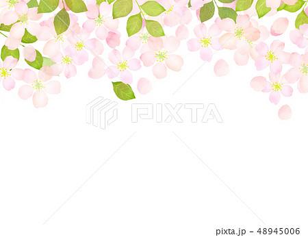 桜 水彩風 テクスチャー 48945006