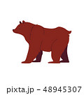 Grizzly and brown bear in a flat cartoon style. 48945307