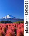 富士山 コキア 紅葉の写真 48950344