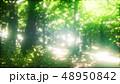 森林 林 森のイラスト 48950842