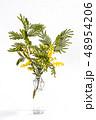 花 植物 葉の写真 48954206
