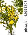 花 植物 葉の写真 48954208
