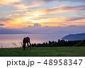 馬 都井岬 野生馬の写真 48958347