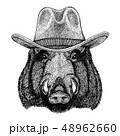 イノシシ 猪 ベクトルのイラスト 48962660