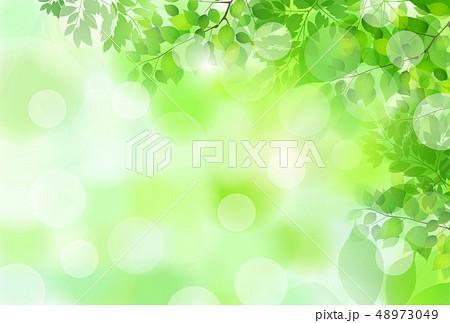 新緑 葉 緑 背景  48973049