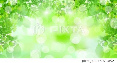 新緑 葉 緑 背景  48973052