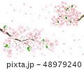 桜 花 春のイラスト 48979240