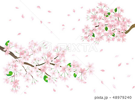 桜の背景素材 48979240